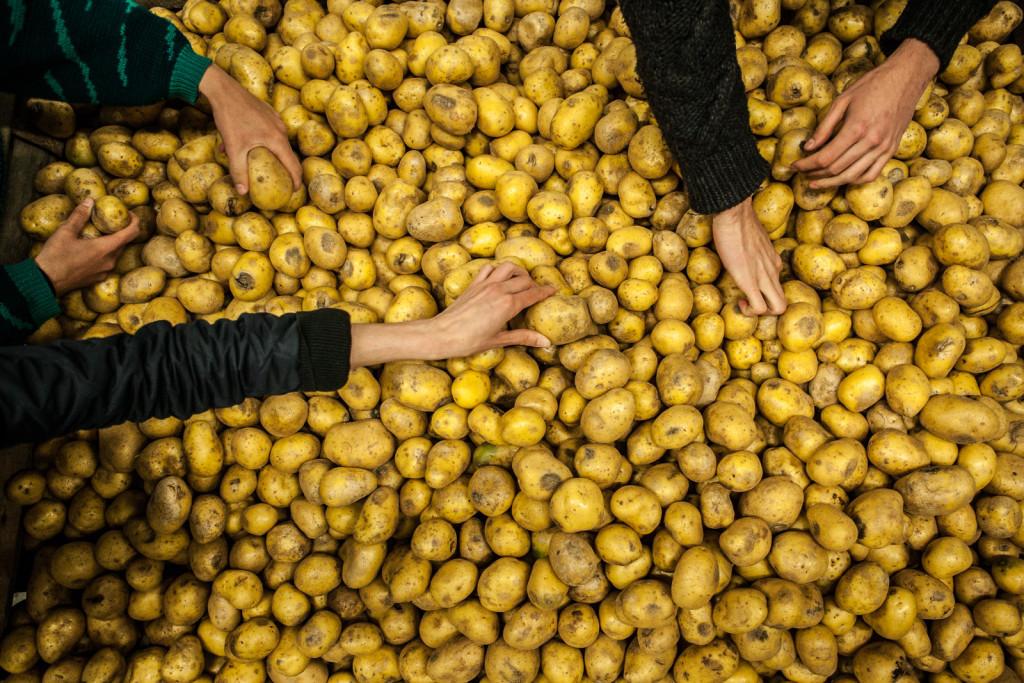 vyrazene brambory