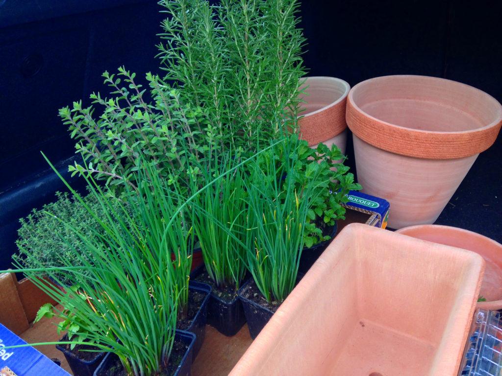 rohlik-zelene-bylinky