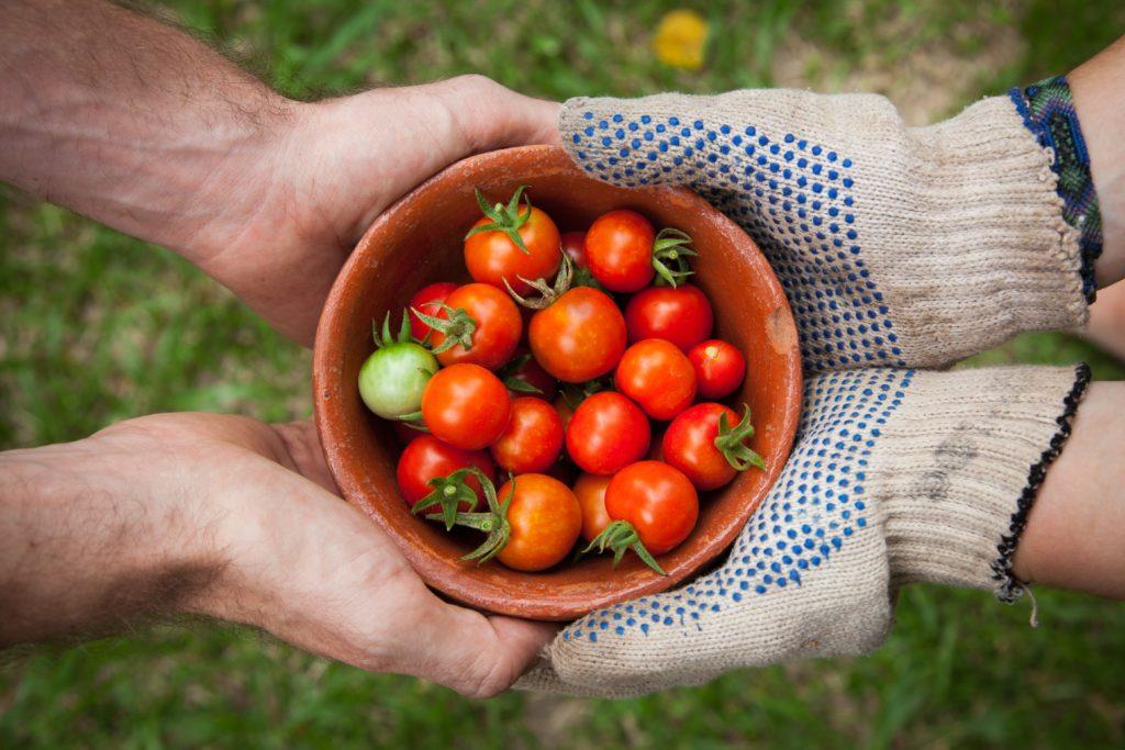 Biopotraviny v praxi